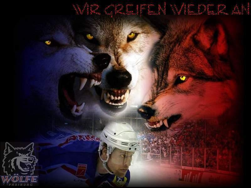 Wolf Cat Call Gif
